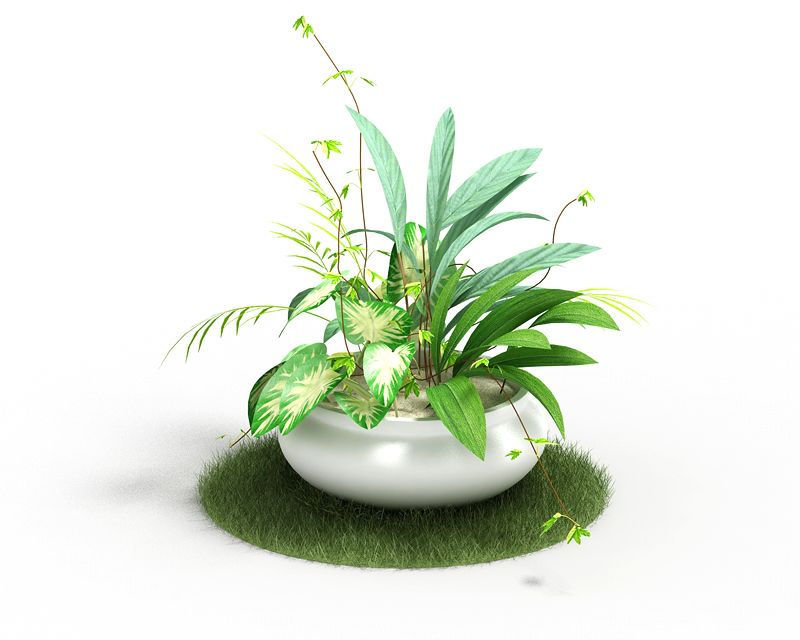 Plant 58 AM4 for Cinema4D Archmodels