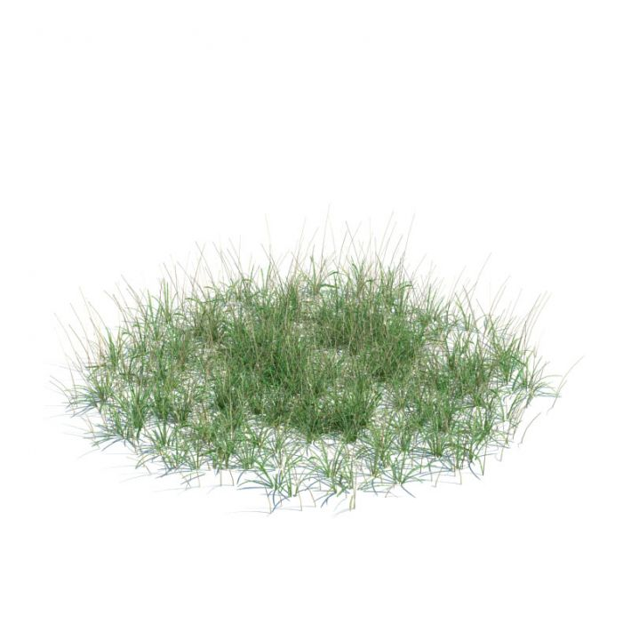 simple grass large 135 am124