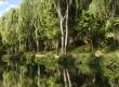 Scattering Trees in Blender - Tip of the Week