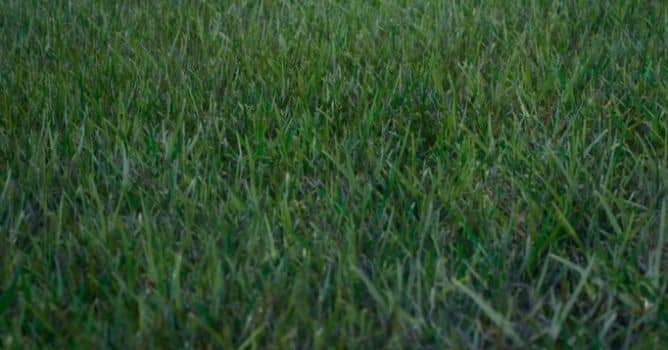 Create grass field in Unreal Engine - Evermotion