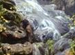 Create Animated Creek in Blender