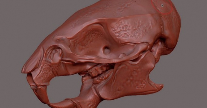 Create materials in ZBrush - Evermotion