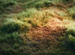 Create a grass field in Blender