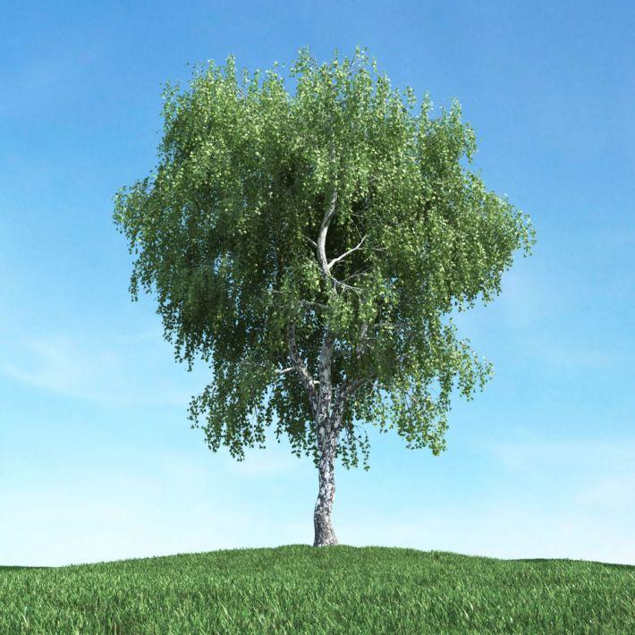 Дерево 3 д