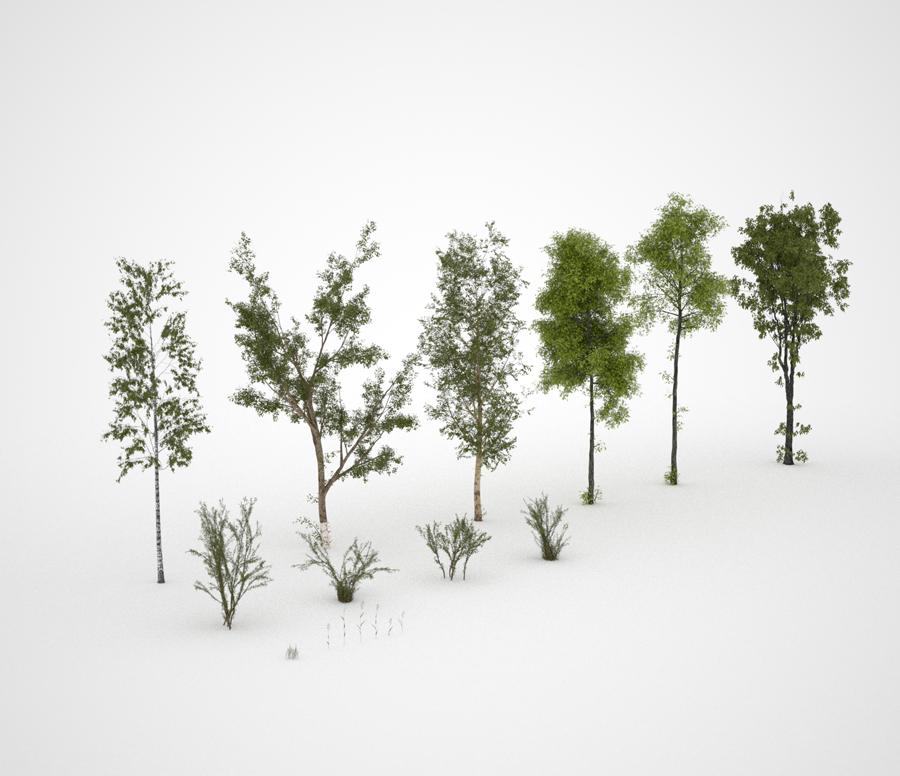 4_vegetation.jpg