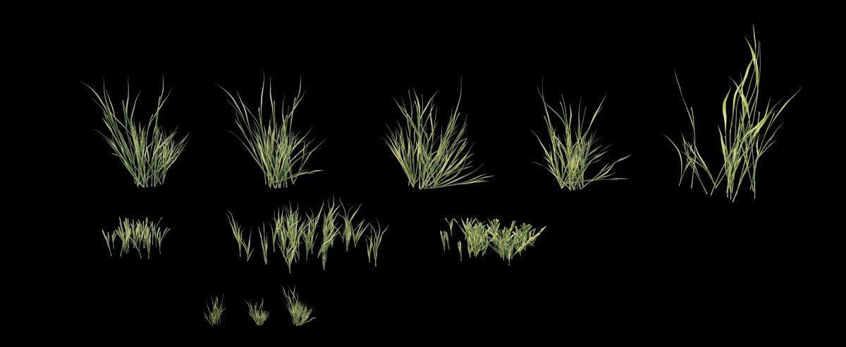 Grass_1_evermotion.jpg