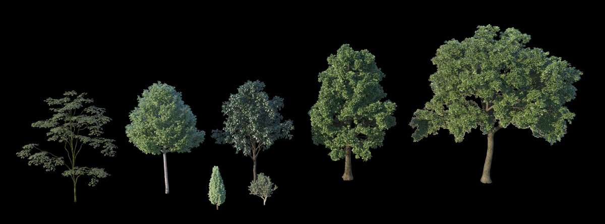 Trees_2_evermotion.jpg
